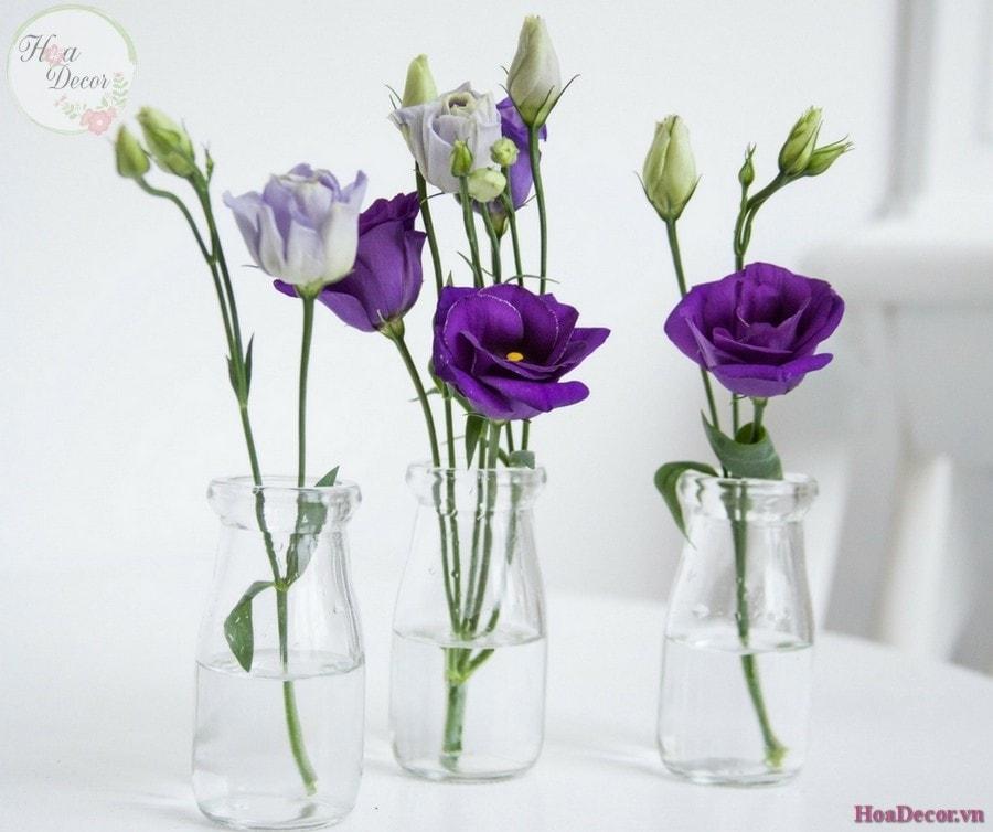 Kiểu Bình Hoa đẹp